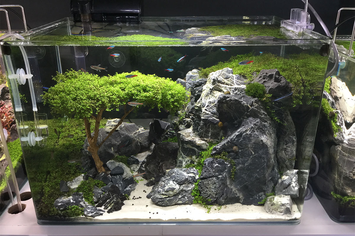 acquari giapponesi zen casamia idea di immagine