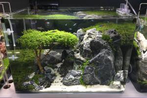 Acquari Zen-4